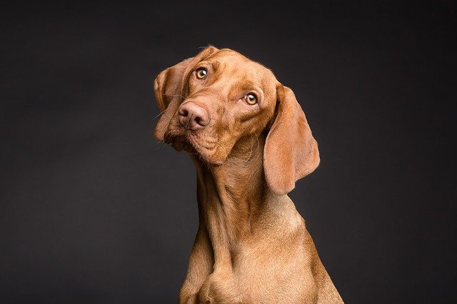 Brun hund